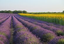 Road Trip Routes in France