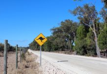 East Coast of Australia Road Trip Itinerary